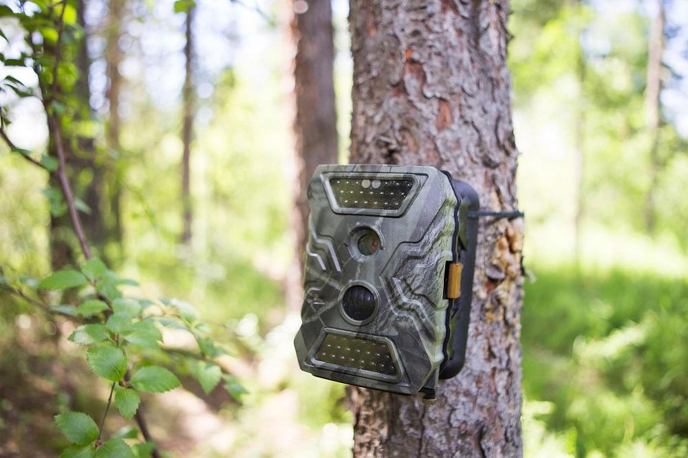 trail camera pest